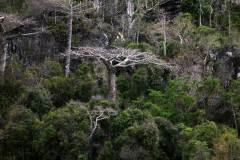 Foret-de-Baobab-04