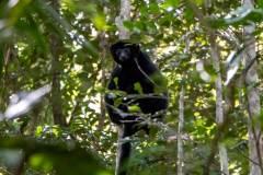 Black-Lemur-Park-149
