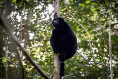 Black-Lemur-Park-163