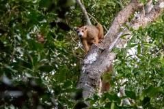 Black-Lemur-Park-251